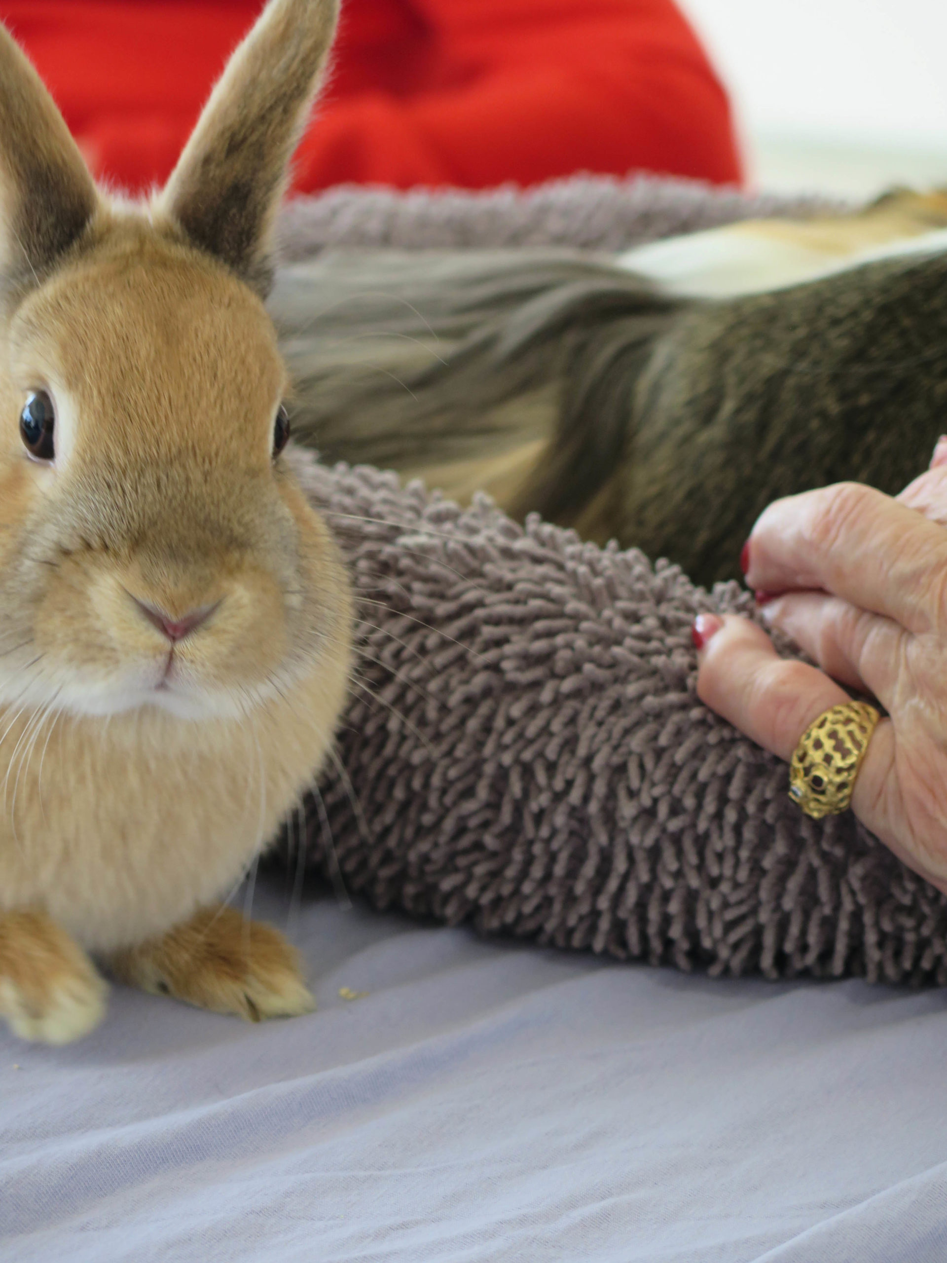 Activité - Zootherapie